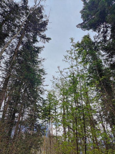 Ideen für den Wald mit Kindern
