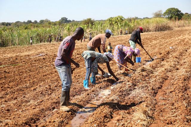 Carta do leitor: Na agricultura não há ilusões