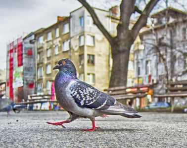 Décryptage un pigeon