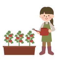 ベランダ菜園 収穫!!