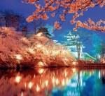 高田公園の夜桜 ライトアップの時期と時間は?花火打ち上げは?