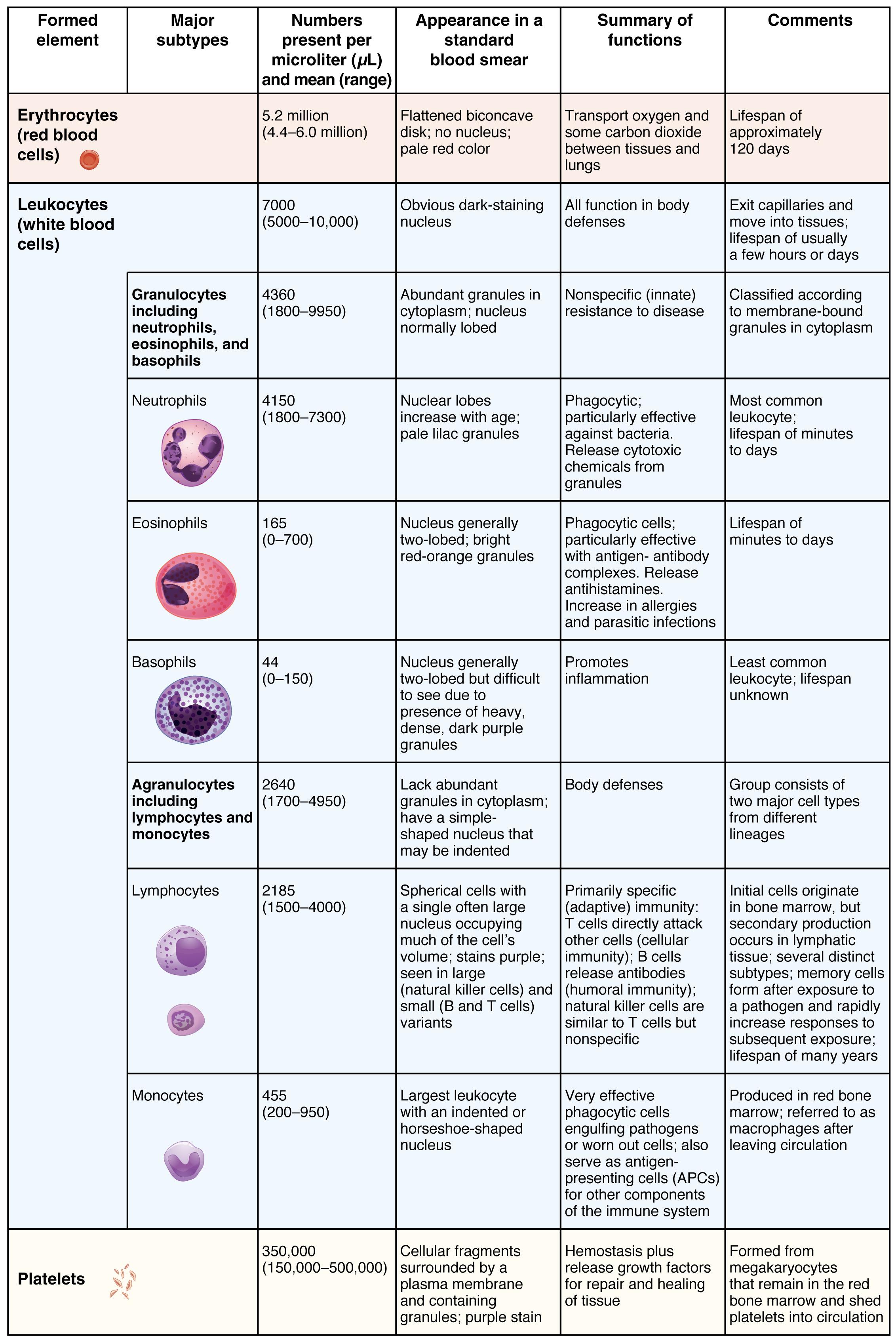 18 3 Erythrocytes Anatomy Amp Physiology