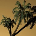 High Poly Coconut Tree