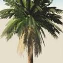 Realistic Palm Tree