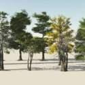 Realistic Trees Free 3d Models