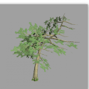 Curved Pine Tree Free 3d Model