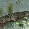 Animal Crocodile