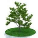 Tree 3d Max Model Free