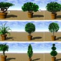Garden Tree Plant 3d Max Model Free