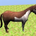 Wild Pinto Horse Rigged