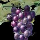 كرمة العنب مع الفاكهة