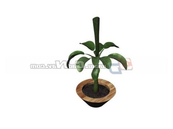 Indoor Plant Bonsai Plant