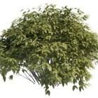 Small Bush Tree
