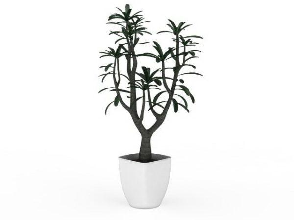 Jardín de interior pequeña planta en maceta