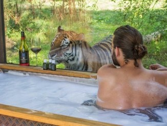 Port Lympne bath with tiger outside the window