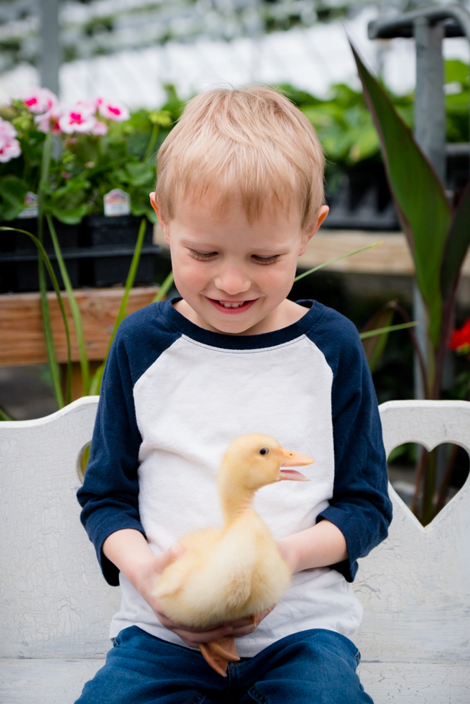 Young boy with a little duckling