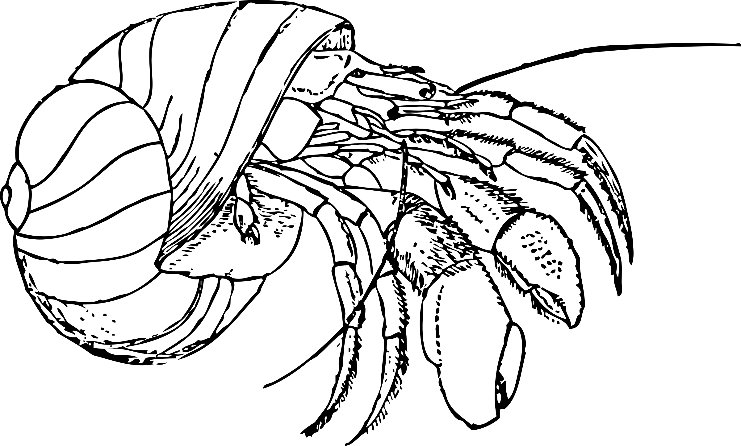 free coloring pages of outline of a crab