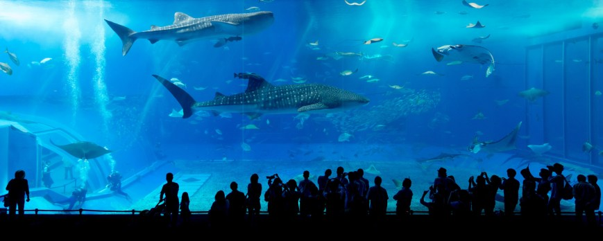 People stand in front a large aquarium. Fishes and sharks swim in it.