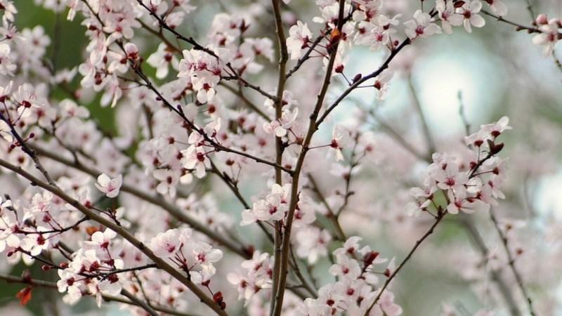 les meilleures destinations pour le mois d'avril, où partir, partir en avril