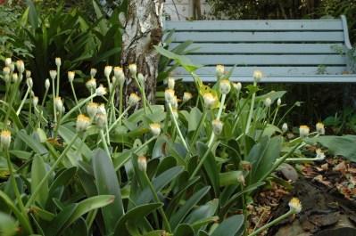 3-bench-forest-dsc_0001
