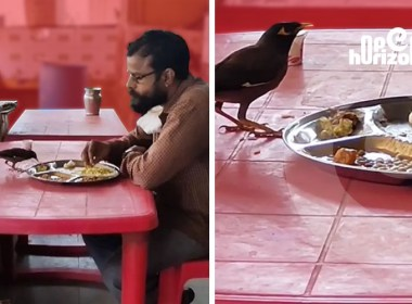 man-and-bird-share-food-from-the-same-plate