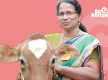 dairy-farm-with-80-cows-lily-an-accomplished- farmer-in-the-industry