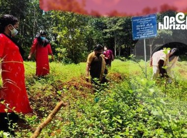 herbs-are-the-whole-agriculture-a-new-venture- of-kerala-women