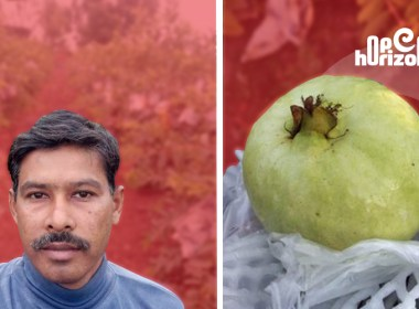 thailand-guava-cultivation-mabi-farmer-making- a-profit-of-30-lakhs