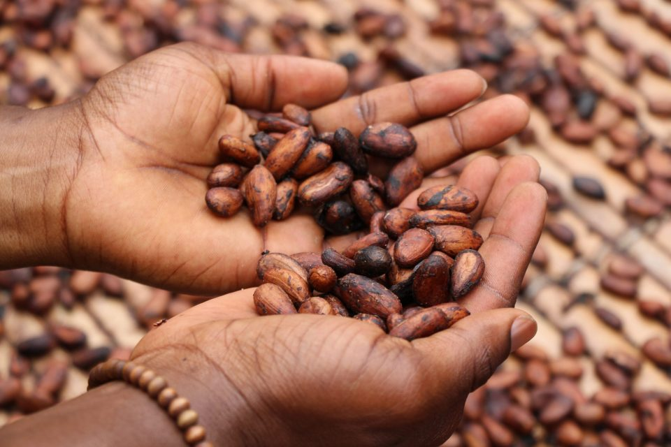 Commercial farming crops in Cameroon