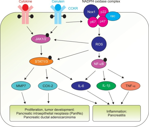Tnf Apoptosis Necrosis Proliferation Pathway