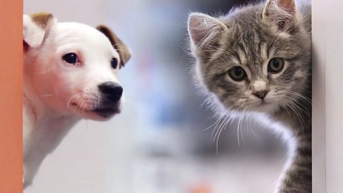 cuccioli in ufficio