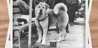 Muore il cane Hachiko