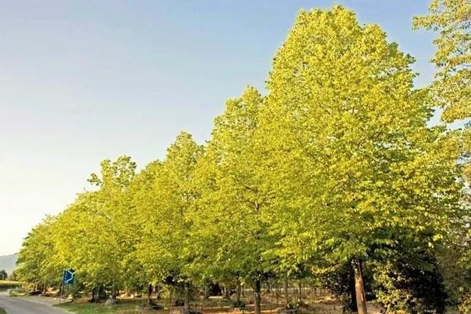 alberi clima