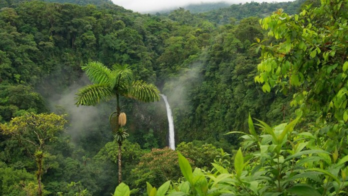 foresta amazzonica-Calipso-Perù