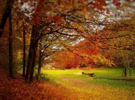 motivi d' autunno