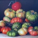 La vera storia delle piante dalle terre americane all' Europa