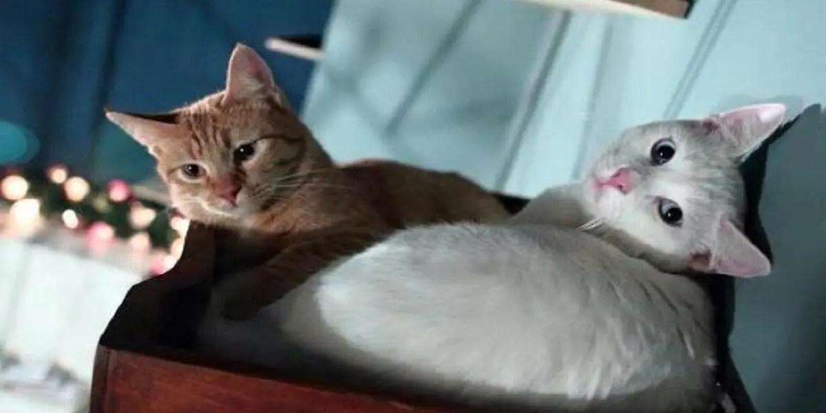 Romeow, unico cat bistrot della capitale