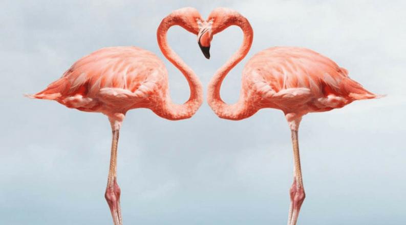 a2d8a316f5319 Flamingo mania