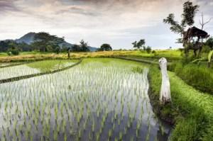 Bioenergia prodotta dalle piante: una grande risorsa