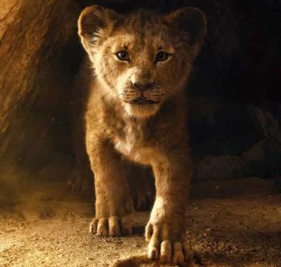 Il Re Leone ritrova il suo posto nel cerchio della vita