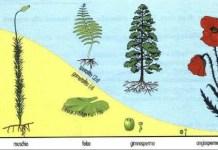 Le famiglie di piante : l'albero genealogico della botanica