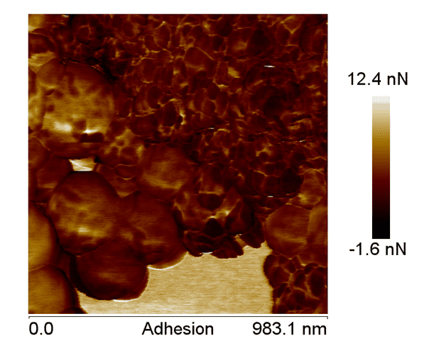 Figure 6 shows the AFM adhesion image of the nano-particles coated with the nano-hydroxyapatite