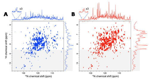 Figure 11. High quality 15N-detected TROSY spectrum of a non-deuterated, large protein under physiological salt conditions.