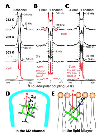 Figure 5 shows the deuterium solid-state NMR analysis of amantadine binding to M2 proton channel from nmr active nuclei influenza A virus