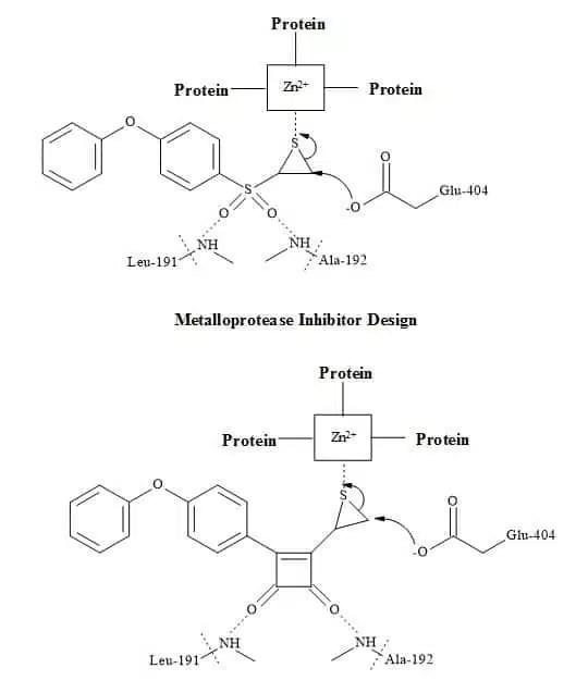 Figure 71. Matrix metalloprotease metaphors