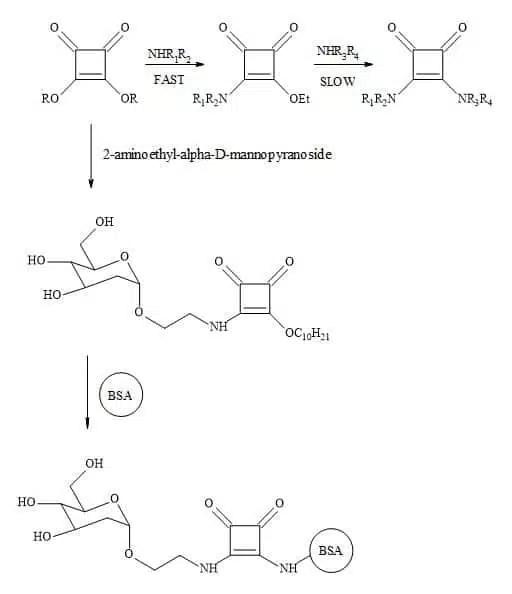 Figure 78. Tietze's methodology towards squaramide conjugation with biomolecules