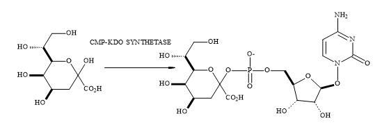 Figure 83. Synthesis of KDO