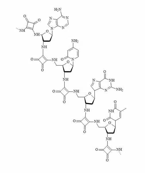 Figure 91. Squaramide DNA