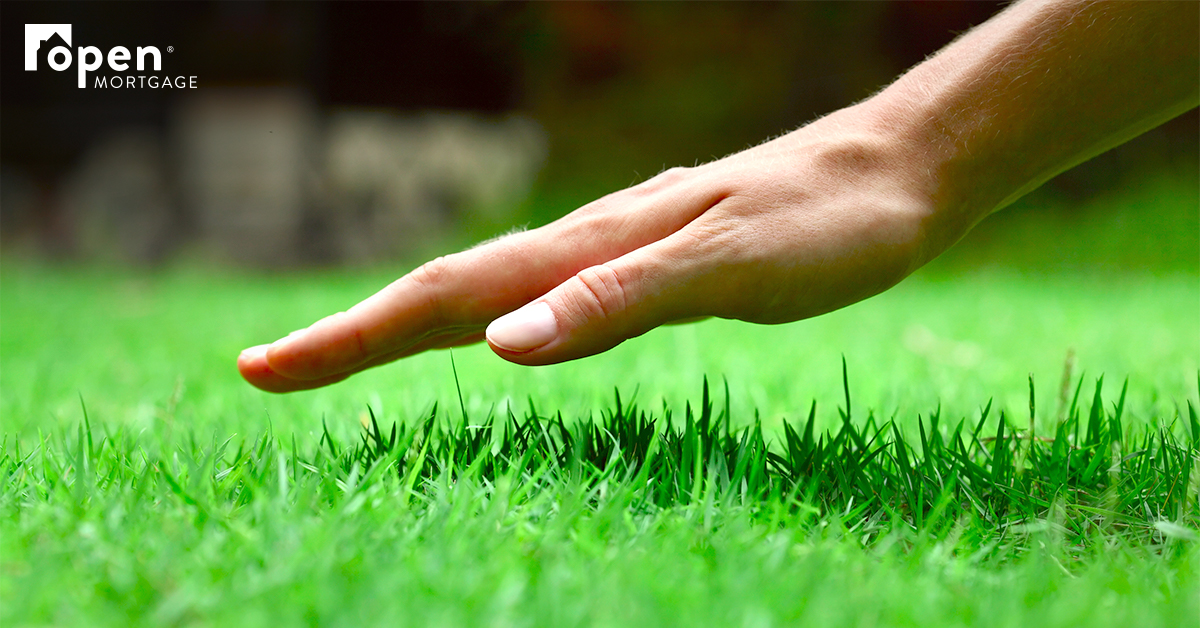 hand hovering over green grass