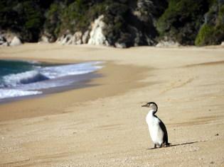 4) Cormorant